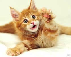 Коты лечат болезни