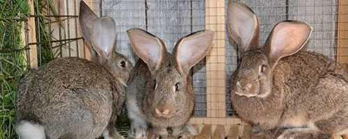 Какие есть клетки для кроликов