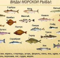 Благородные виды рыбы