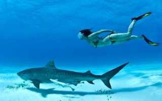 Скорость акулы при нападении