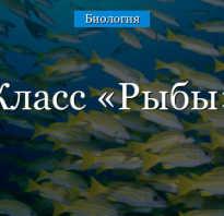 К кому относятся рыбы