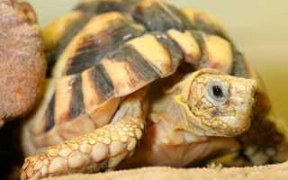 Грунт для сухопутной черепахи