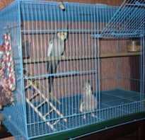 Клетка для попугая корелла фото