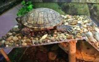 Как сделать мостик для черепах