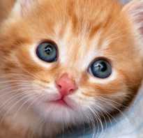 Имя для рыжего котенка мальчика