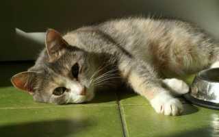 Лечение поджелудочной у кошек
