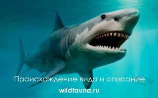 Рыба больше мегалодона