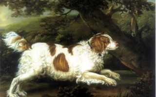 Собака без ушей порода