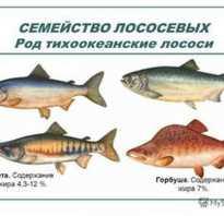 Семга виды рыб