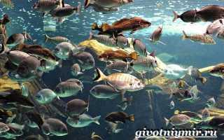 Фото рыб из красной книги