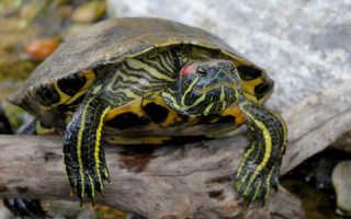 Камушки для черепахи