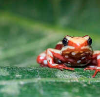 Жаба это земноводное или пресмыкающееся