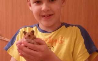 Рассказ про домашнее животное хомяка