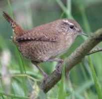 Насекомоядные птицы фото и названия