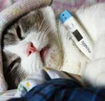 Заболевания шерсти у кошек