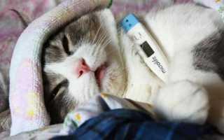 Болезни котов и их симптомы