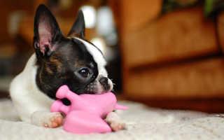 Породы домашних собак