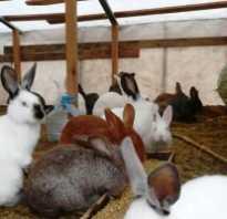 Чем кормить кроликов видео