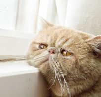 Микоплазмоз лечение у кошек москва