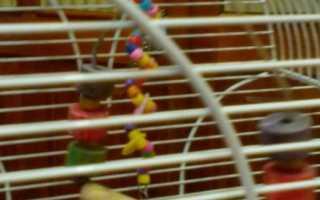 Клетка для попугая из дерева