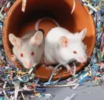 Сколько спят крысы домашние