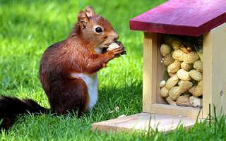 Орехи которые кушают белки