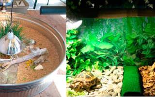 Большой террариум для сухопутной черепахи