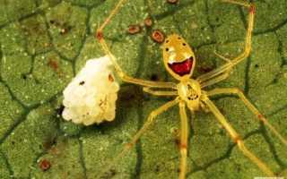 Самые красивые пауки фото