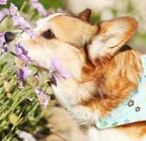Лечение аллергии у собак препараты