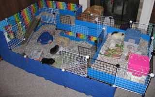 Размер домика для крысы