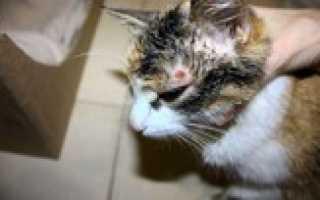 Какие болезни бывают у котов