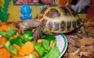 Черепахи едят рыб