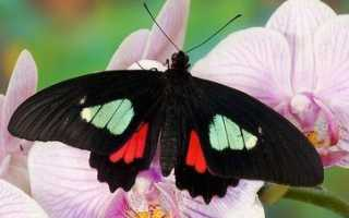 Сколько живут бабочки в домашних условиях