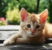 Имя для рыжего котенка