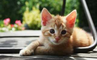 Клички для котов мальчиков рыжего цвета