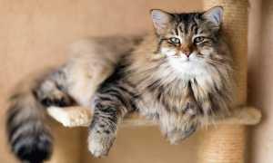 Кошки от которых не бывает аллергии