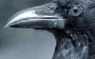 К какому классу относится ворона