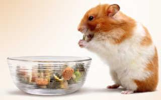 Чем кормить сирийского хомяка в домашних
