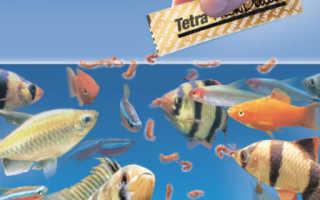 Как кормить аквариумных рыб
