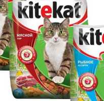 Можно ли кормить кота китикетом