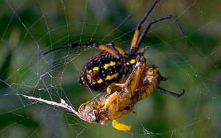 Способы питания пауков