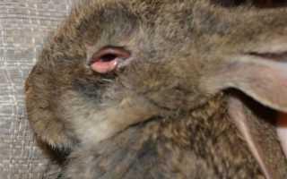 От чего болеют кролики