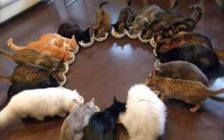 Чем кормить котенка 8 месяцев