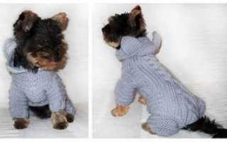 Вязание одежды для собак мелких пород