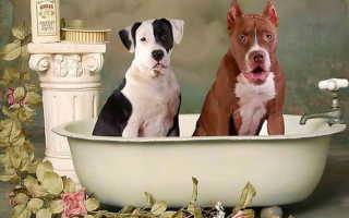 Сколько можно мыть собаку