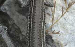Голова ящерицы фото
