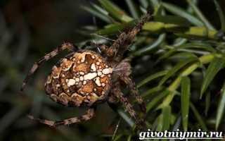 Пауки среда обитания питание размножение значение