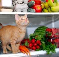 Чем лучше кормить котов