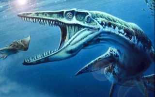 Мегалодон против акулы