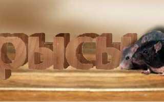 Череп крысы фото